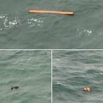 ボルネオのインドネシアの島の近くにJavaで浮動オブジェクトを見られているbhyr不足している平面面を見つけるためにチーム