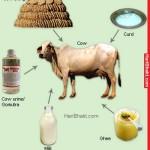 ヒンドゥー教過激派組織は牛糞数百万ドルを取ります