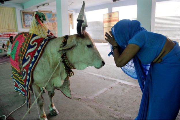 グジャラート州のインド州は、生命刑で牛の虐殺を処罰する