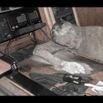 デイリースターは、船は腐った死体でいっぱいだったと報告している