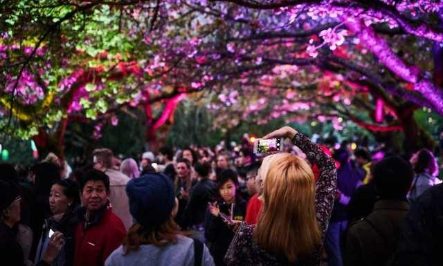 日本の河川公園でのエキサイティングなライトショーでは、チェリーフラワーに40万個以上の電球が装飾されました。