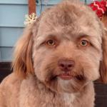 信じられないほどの人間の顔を持つヨギ犬の画像