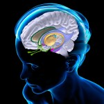 脳にダメージを与える可能性のあるトップ10の習慣