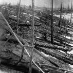 事件から20年後の写真では、木も倒れています